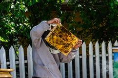 Beekeeper som kontrollerar honeycoms på bikupan royaltyfria foton