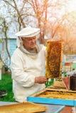 Beekeeper som rymmer en honungskaka full av bin Beekeeper i skyddande workwear som kontrollerar honungskakaramen på bikupan arbet Royaltyfri Fotografi