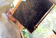 Beekeeper som samlar honung i soligt väder royaltyfri foto