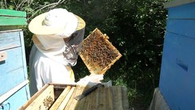 A beekeeper in a special suit looks at a frame with honeycombs for bees.  stock video footage