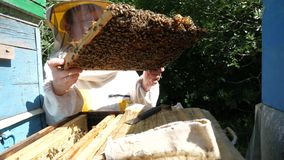 A beekeeper in a special suit looks at a frame with honeycombs for bees in the garden in summer. A beekeeper in a special suit looks at a frame with honeycombs stock video