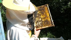 A beekeeper in a special suit looks at a frame with honeycombs for bees in the garden in summer.  stock video