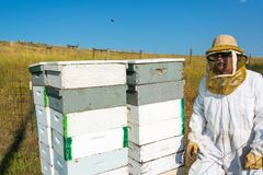 Beekeeper with Beehives. Beekeeper standing next to beehives in a bee yard near Buffalo, Wyoming stock images
