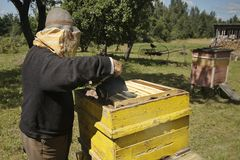 A beekeeper is working with bee smoker in an apiary. stock photo