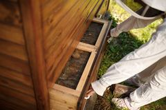 Beekeeper in suit is working at apiary. Opening wooden beehive Apiculture concept stock photography