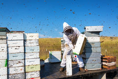 Beekeeper Surrounded by Bees Royalty Free Stock Photography