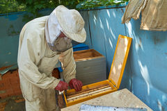 Beekeeper takes out frame Stock Photography