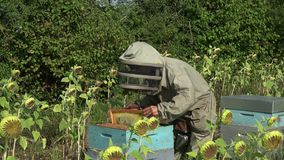The beekeeper takes out a framework. Checking the condition of a framework stock video