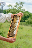 The beekeeper takes out from the hive honeycomb filled with fresh honey. Apiculture. Royalty Free Stock Images