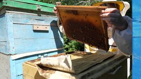 Beekeeper is taking out the honeycomb on wooden frame to control situation in bee colony. Beekeeper is taking out the honeycomb on wooden frame to control stock video