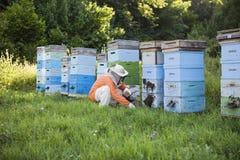 Beekeeper Tending Beehives Royaltyfria Bilder