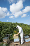 Beekeeper tending to hives Royalty Free Stock Images