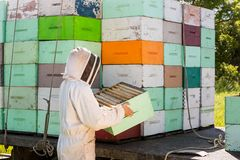 Beekeeper Unloading Honeycomb Crate From Truck royalty free stock image