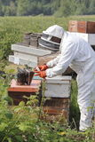 Beekeeper Using Fogger or Smoker Royalty Free Stock Images