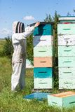 Beekeeper Using Fume Board on Hive Stock Photography