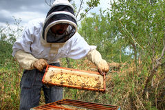 Beekeeper Royalty Free Stock Image