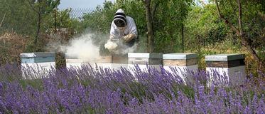 Beekeeper Stock Photos