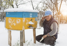 Beekeeper winter monitors the status of bees in the hive Stock Image