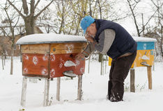 Beekeeper winter monitors the status of bees in the hive Stock Photography