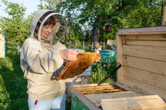 Beekeeper woman controlling beehive and comb frame. Apiculture. Royalty Free Stock Photo