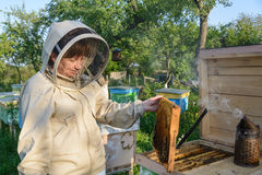 Beekeeper woman controlling beehive and comb frame. Apiculture. Royalty Free Stock Image