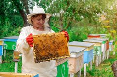 Beekeeper woman controlling beehive and comb frame. Honeycomb. Apiary. Stock Images