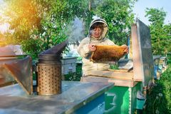 Beekeeper woman controlling beehive and comb frame. Honeycomb. Apiary. Beekeeper woman controlling beehive and comb frame. Honeycomb. Apiary stock photos