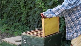 Beekeeper Woman Inspecting Frames stock footage