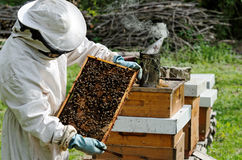 A beekeeper at work Royalty Free Stock Image