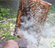 Beekeeper at work. A beekeeper and the honeycomb stock photos