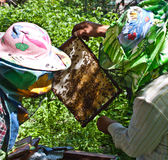 Beekeeper at work. A beekeeper and the honeycomb royalty free stock images
