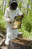 Beekeeper at work Stock Image
