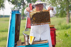Beekeeper at work. Beekeeper with honeycombs working in apiary Royalty Free Stock Photo