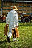 Beekeeper at work Royalty Free Stock Image