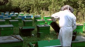 Beekeeper at work stock video footage