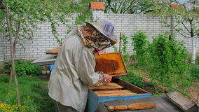 Beekeeper work on an apiary stock video footage