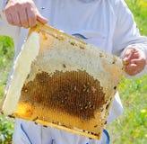 Beekeeper at work Stock Photos