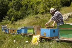 Beekeeper at work Stock Images