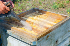 Beekeeper at work. Beekeeper smokes beehive before he takes out honeycomb frames Royalty Free Stock Photo
