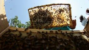Beekeeper at work stock footage