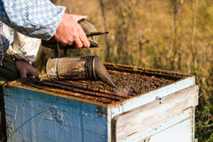 Beekeeper workind on beehvies Royalty Free Stock Images
