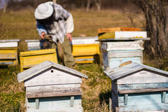 Beekeeper workind on beehvies Stock Images