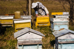 Beekeeper workind on beehvies Stock Image
