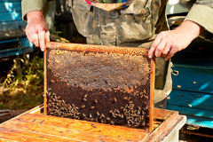 Beekeeper working Stock Images