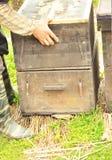 Beekeeper working Stock Photo