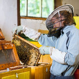Beekeeper working in an apiary Royalty Free Stock Image