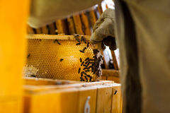 Beekeeper working in an apiary Stock Photos
