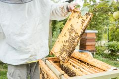 Beekeeper working on bee colony holding honeycomb. In hand Stock Photos