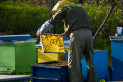 Beekeeper working on bee hive Stock Image