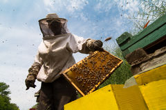 Beekeeper working on beehive. Horizontal sideview portrait of beekeeper in protection suit getting out a honey comb from a yellow beehive with bees swarming Royalty Free Stock Photo